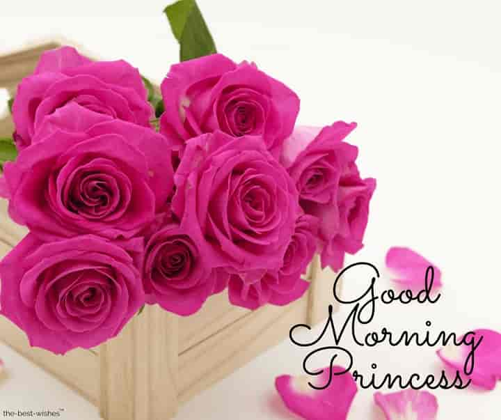 good morning princess with pink roses
