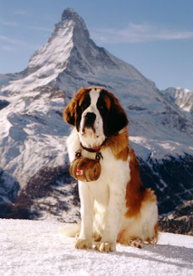 Saint Bernard Dog Image