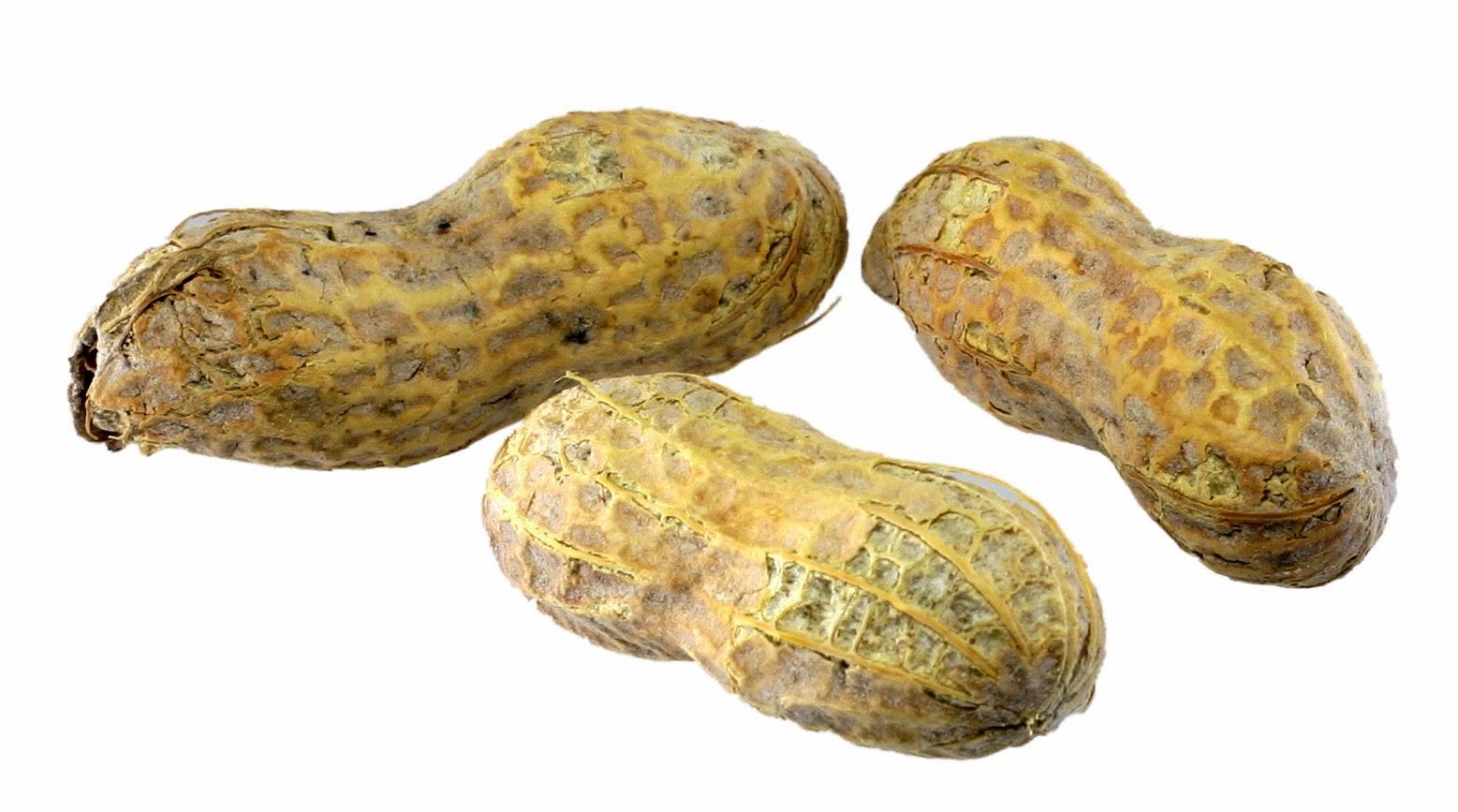 Berapa Seharusnya Kadar Kolesterol Normal dalam Tubuh?