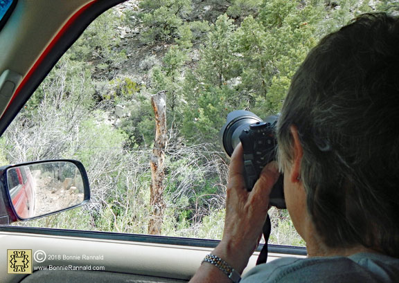 Photographing the Western Fence Lizard