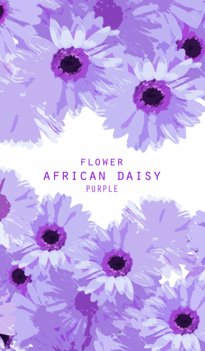 FLOWER AFRICAN DAISY PURPLE