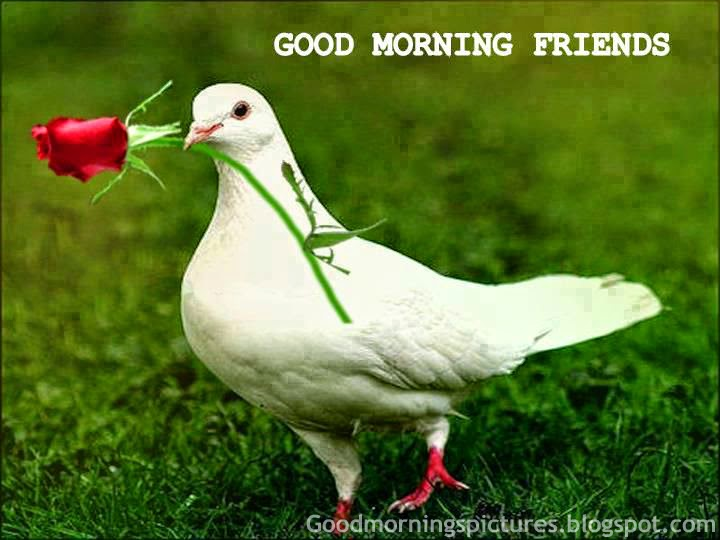 Good Morning Beautiful Birds Hd Images Azquotes