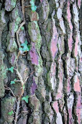 tree bark photo blog