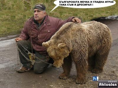 Българската мечка и гладна играе.. така съм я дресирал!