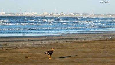 Nascendo o Dia na Praia e Passaros