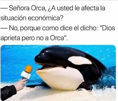 Señora Orca, a usted le afecta la situación económica? No, porque como dice el dicho: Dios aprieta pero no a Orca.