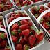 ΕΡΕΥΝΑ: Η φράουλα το πιο… «φαρμακερό» φρούτο;