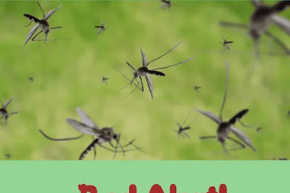 Warning! Dengue is on Rise ⚠️ No Vaccine can Stop it