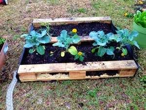 Garden on the Cheap! How to Create a Palate Garden