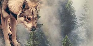 http://destiny-of-wolves.blogspot.com