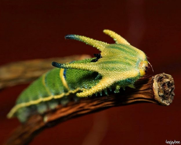 how-a-caterpillar-becomes-a-butterfly-5