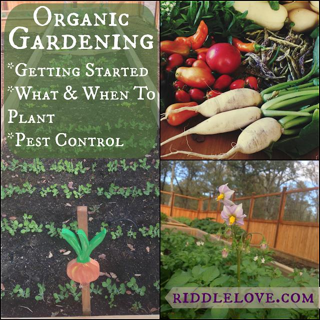 Riddlelove: Organic Gardening: Getting Started, Choosing