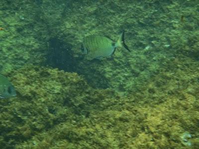Snorkel en la costa brava - españa
