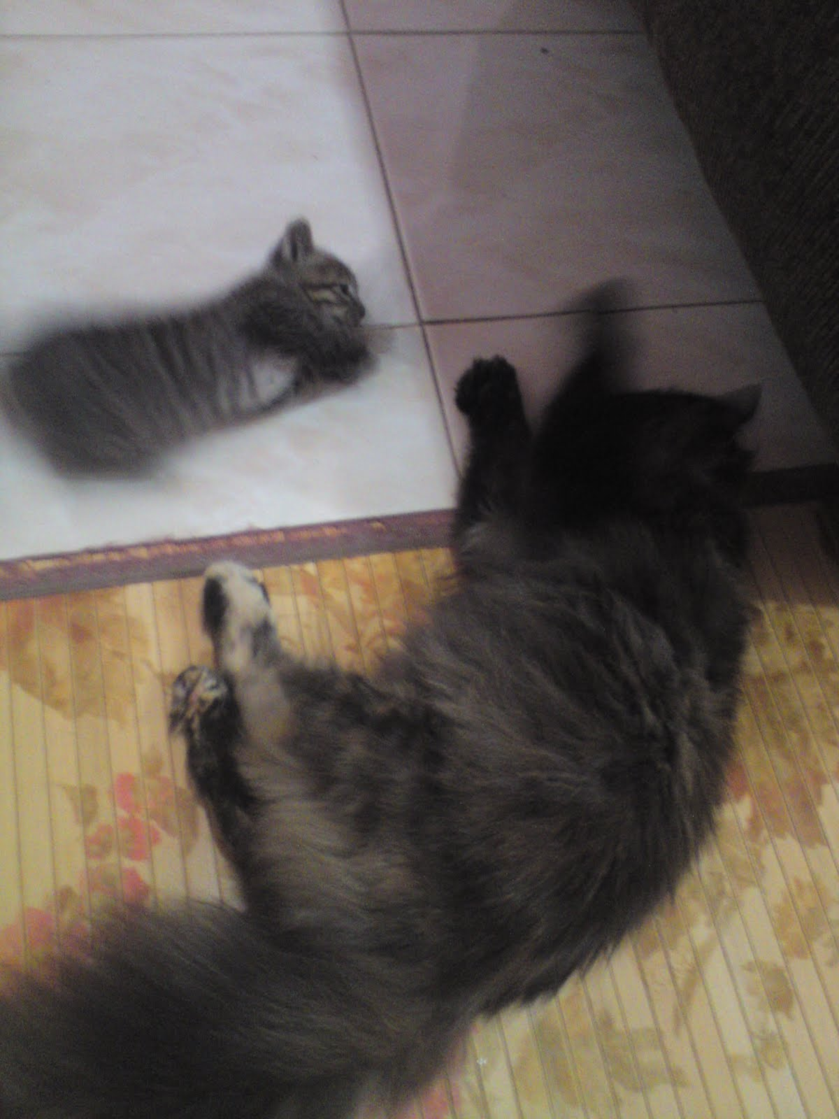 Kami Pencinta Kucing...