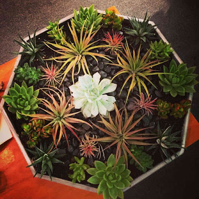 Lucy Hale's gift to Troian Bellisario Succulent plants for directing episode 7x15