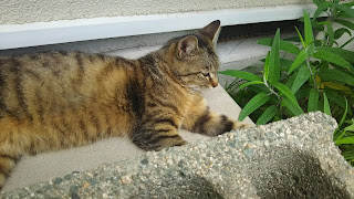 ブロックの影でくつろぐ猫