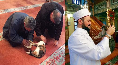 Aziz Mahmud Hudayi Mosque Masjid Kucing di Turki, Jamaah Ibadah Bareng dengan Kucing