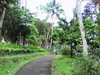 coffee plantation java