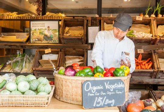 10 Ideas to Start an Organic Food Business From Your Home