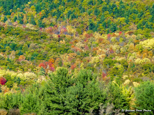 Vermont, los colores del otoño - Estados Unidos por El Guisante Verde Project