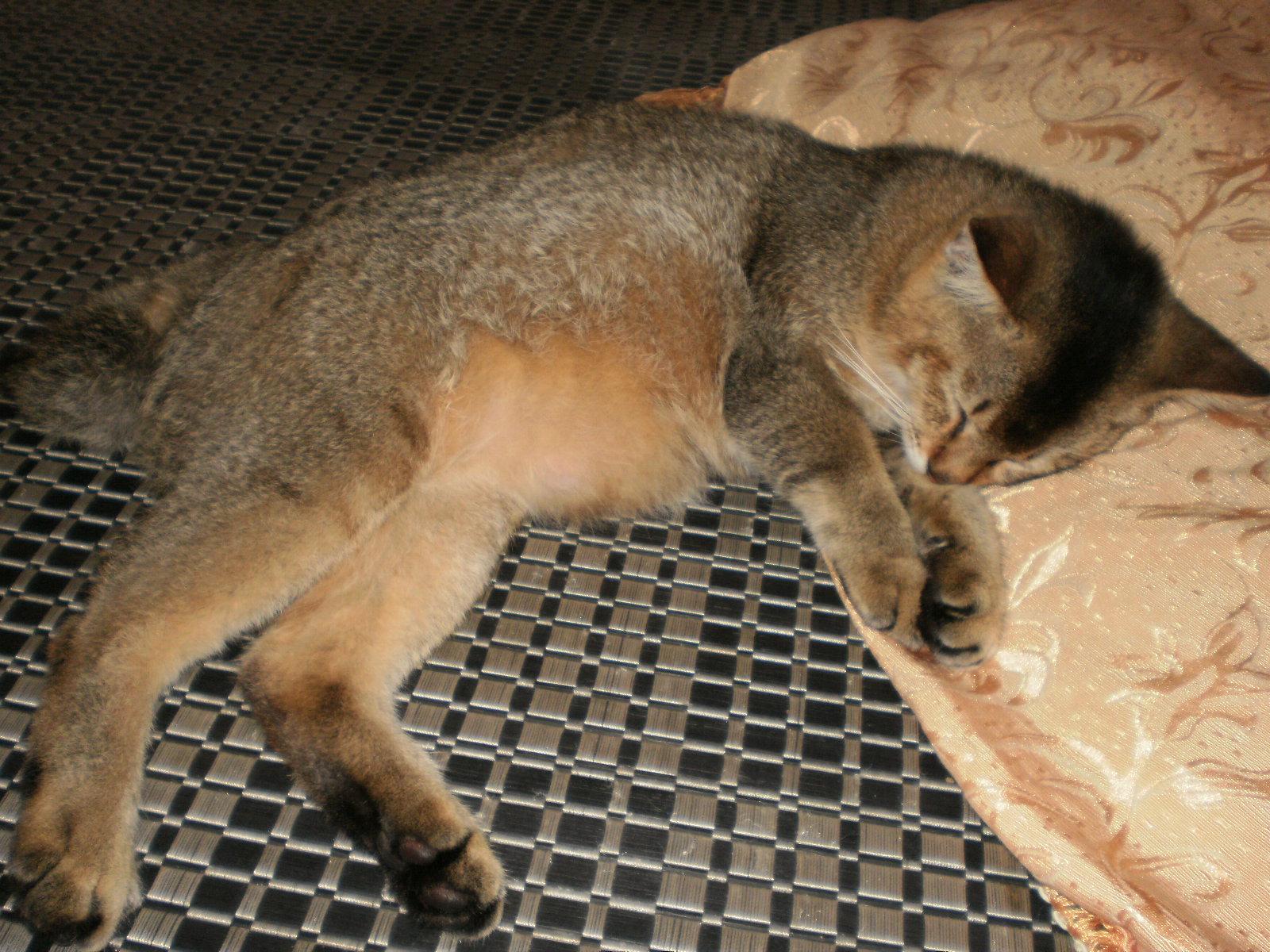 Mimpi Kucing Dan Anak Kecil Arti Mimpi Dikejar Hantu Setan
