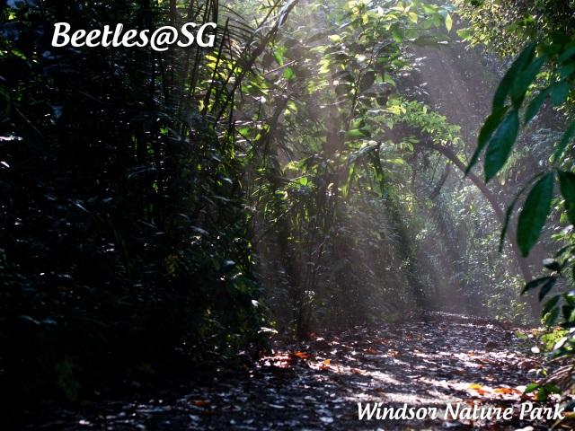 Beetles@SG BLOG: Morning Walk At Windsor Nature Park (31 Mar
