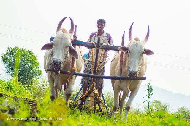 Farmer villager