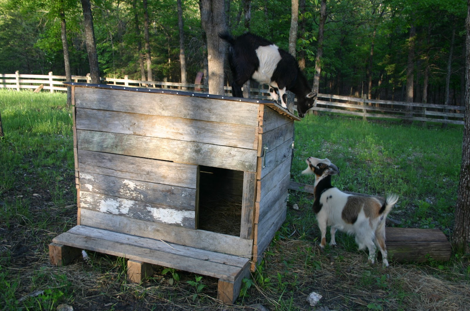 The Ymker Family Update Goat Shed
