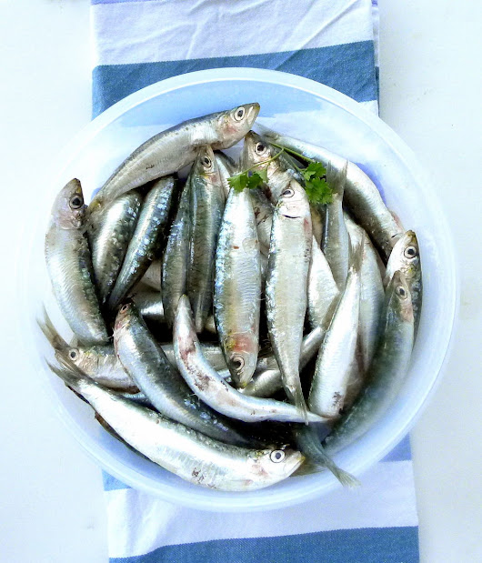 EAT SARDINES, SAVE THE PLANET!
