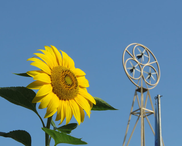 A sunflower and the three little wind turbines of A Room for London, Queen Elizabeth Hall Roof Garden, Southbank Centre, Belvedere Road, London