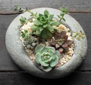 0 pot tanaman hias dari sebongkah batu