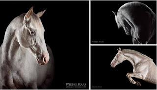 caballos bonitos en fotos