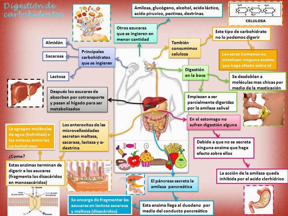 Blog de Fisiología Básica de Rogelio Eduardo Enriquez..