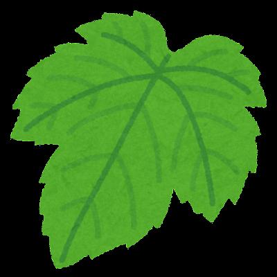 葡萄の葉のイラスト