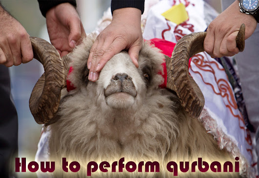 How to perform Qurbani in Islam - Researched Articles about Qurbani