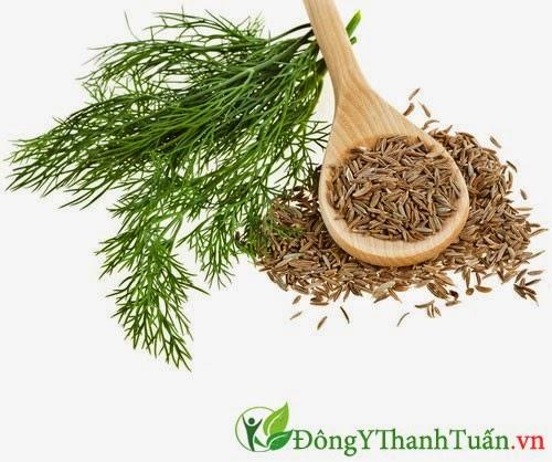 Hạt cây thì là là thảo dược chữa đau dạ dày