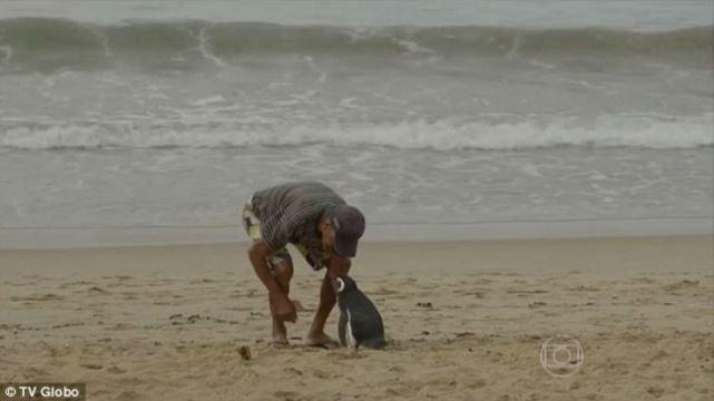 La amistad entre un pescador y un pingüino.