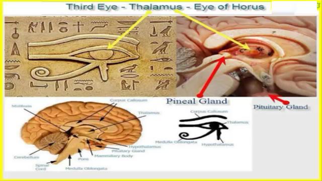 secrets about the human brain