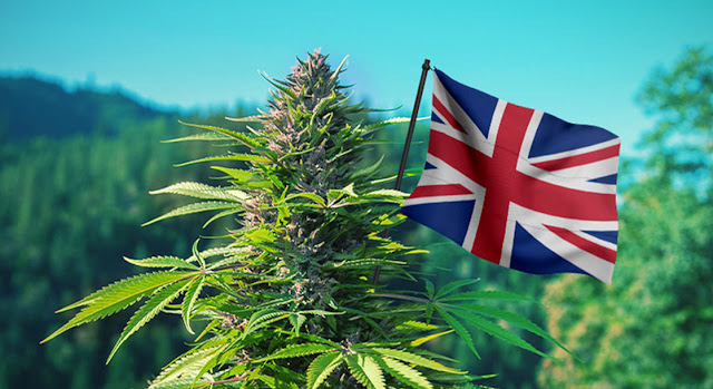 Patient access to cannabis in the UK: Cellen breaks down barriers