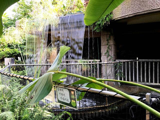 熱帯エリア 流れる滝と池 ときわ公園、植物園もリニューアル。 プラントハンター西畠清順が手がける?