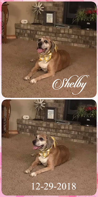 Shelby's Photos (c) 2018 Shannon G. Wamsley