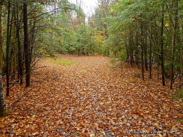 Brewster Peninsula Trails - Lake Placid, por El Guisante Verde Project