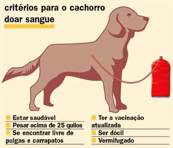 alguns critérios para o cão doar sangue