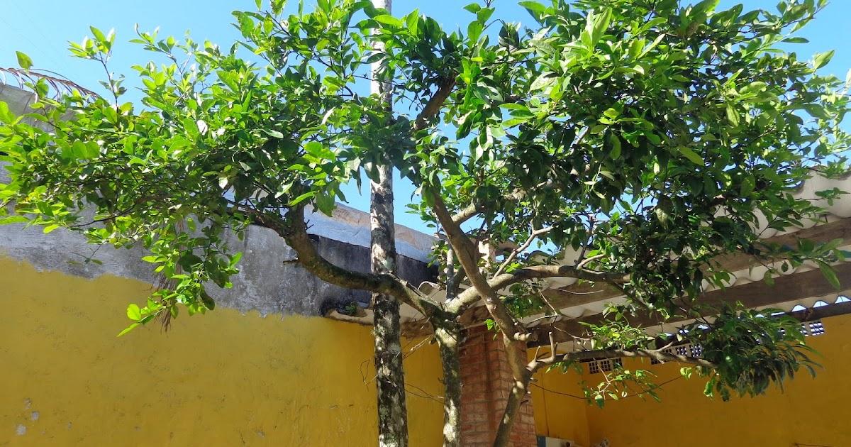 imagens de jardim horta e pomar:Pomar e Horta em Vasos: Entenda os tipos de poda para árvores