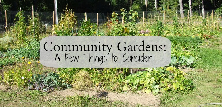 Livin' In The Green Community Gardens A Few Things To Consider