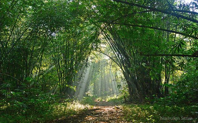 Semburat cahaya menyusup di rerimbunan pohon Bambu