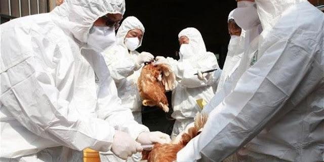 نوع جديد من إنفلونزا الطيور في ألمانيا
