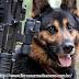 Os Cães de Guerra do Exército Brasileiro