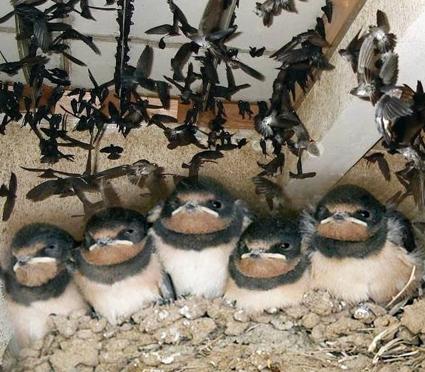 Cara Mudah Usaha Budidaya Ternak Sarang Burung Walet Rumahan Tipstriksib