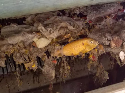 fish-sewer-watersystem